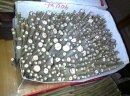 Sadzonki topoli białej