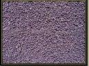 KUPIĘ RZEPAK, RZEPIK!!! Kupię, skup: proso, gryka, owies bezłuskowy, peluszka, łubin, kminek, wyka. Odbieram własnym transportem na terenie całego kraju. Płacę gotówką na załadunku. +48502-522-700 kamila@kampolrusiec.pl