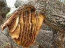 Ukraina.Gospodarstwa pszczelarskie i pasieczne.Miod,ule,propolis,wosk,mleczko pszczeli - zdjęcie 2