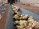 Ukraina.Wspolpraca.Produkcja pasz przemyslowych.Wyslodki buraczane 18 zl/tona