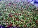 Ukraina.Skupujemy jablka,jagody,owoce lesne z przeznaczeniem na soki