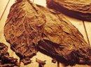 Sprzedam liście tytoniu TANIO