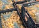 Oczyszczona żółta cebula