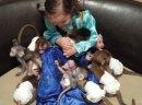Uspołecznione dzieci gotowe do nowych domów małpa
