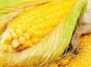 Ukraina.Olej kukurydziany 3,70 zl/litr + ziarna z przemialu,kasze,platki,maka,skrobia,krupy 0,70 zl/kg.Bardzo uniwersalny olej kuchenny uzyskiwany z zarodkow,kielkow kukurydzy w procesie ekstrakcje.Dar natury zamkniety w butelce PET 1L- pak. 15szt, 3,5L-