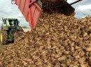 Ukraina.Produkcja cukru spozywczego,bioetanolu.Wyslodki,korzonki buraczane,melasowanie pasz od 200 zl/tona.Cukrownia grupy gorzelni rolniczych przemyslu bioetanolowego oferuje melasowanie pasz,wyslodki suszone,produkty wytwarzania cukru z burakow cukrowy