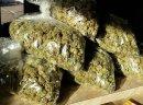 Buy Sour Diesel,Green Crack,Jack Herer,Og kush , Purple haze , bubba kush (567)   323-0930