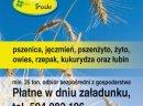 Skup pszenicy- kupiÄ™ pszenicÄ™