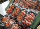 Pomidory cherry  bezpośrednio od producenta z Sycylii.