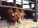 Skup bydła rzeźnego - ZMBM