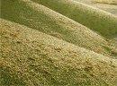 Ukraina. Sloma zbozowa, rzepakowa, lniana. Od 70 zl/tona. Grunty rolne, biomasa, czyste paliwa. Sloma zbozowa zytnia, owsiana, pszenna, pszenzytnia, rzepakowa, lniana, kukurudziana swieza. Czernihowski obw. Surowcy bedace pozostaloscia produkcji rolnicze