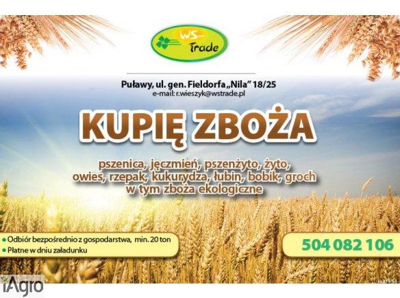 Kupię pszenicę- skup pszenicy