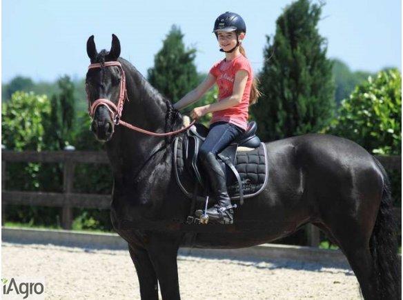 Uroczy, dobrze wyszkolony koń fryzyjski, piękna klacz