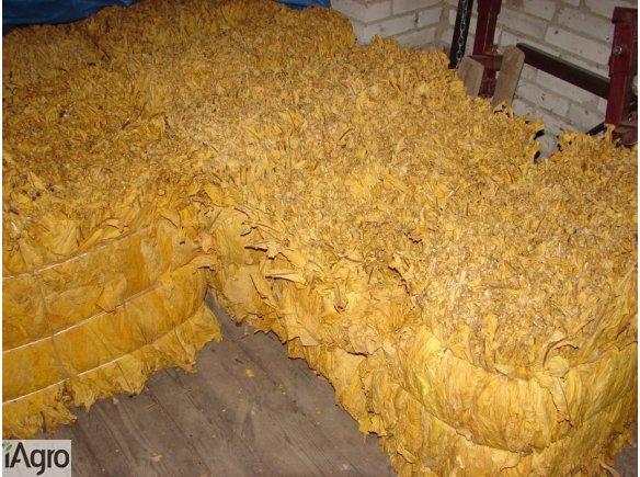 Sprzedam liście tytoniu piękne długie 100%pewne