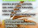 Kupię pszenżyto - skup pszenżyta