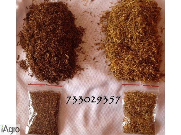Tyton, tytoń, tani,oczyszczony,1kg/79zł, 733-O29-357 Marlboro Ondraszek