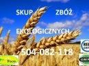 Kupię kukurydzę ekologiczną