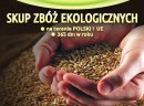 Kupię pszenżyto ekologiczne - skup pszenżyta ekologicznego