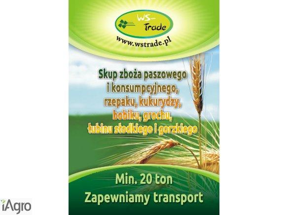 Skup zboża: pszenicy, pszenżyta , owsa, jęczmienia, żyta kukrydzy łubinu