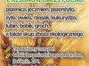 Kupię pszenżyto- skup pszenżyta