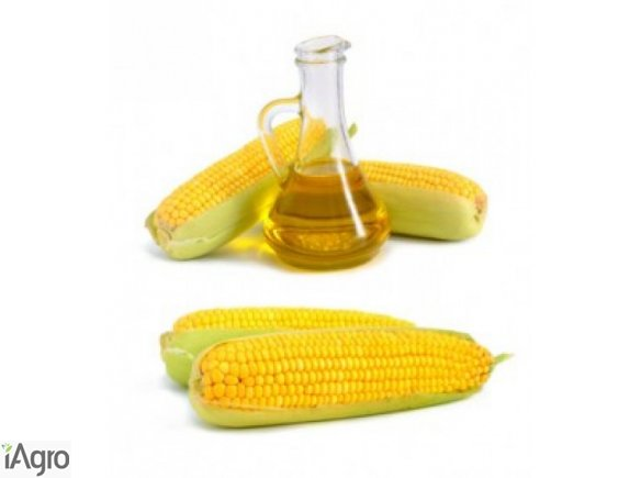Olej kukurudziany nierafinowany [ukraina]