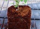 Ukraina. Oferujemy w dzierzawe zrodla, zloza, torfowiska, laki, stawy. Torf ogrodniczy Sapropel 40 zl/tona rozdrobniony, kompostowany na potrzeby pieczarkarnie, upraw roslin, warzyw. Humus odkwaszony pH5,5~6,5 mul denny organiczny, substraty wyprodukowan