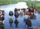 Ukraina. Stada krow, owiec, koz 4 zl/kg w cenie zywca. Oferujemy w dzierzawe nieograniczone ilosci nieuzytkow rolnych. Farma mleczna, przetwornia warzyw i owocow, magazyn nawozow, park maszynowy. Kompleks produkcyjno-magazynowy na terenie 38ha przy trasi