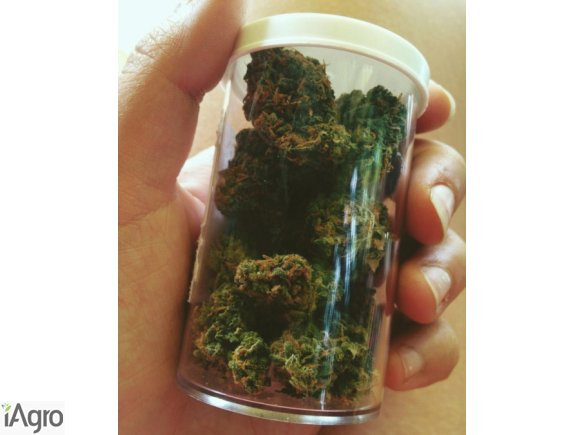 Buy Medical Marijuana and Cannabis Oil online