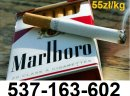 Tani tytoń 55zł/kg Gratisy dla stałych klientów! Dzwoń ! 537-163-602