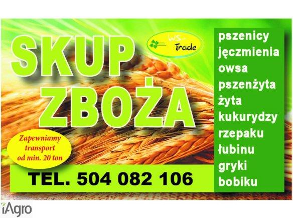 Kupie kukurydzę suchą