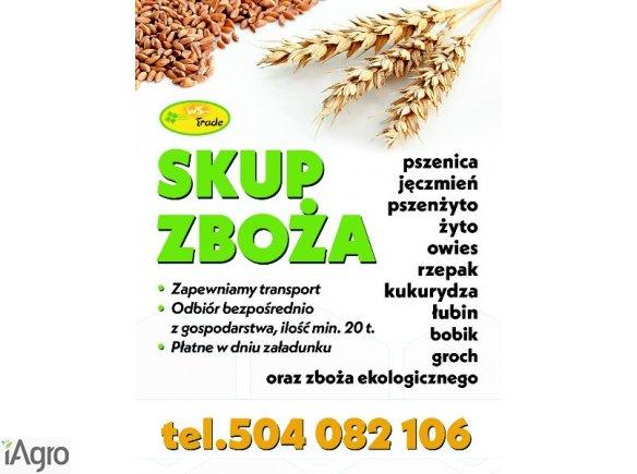 Skup zboża paszowego i konsumpcyjnego: pszenicy pszenżyta owsa jęczmienia żyta grochu łubinu słodkiego i gorzkiego kukurydzy, prosa, gryki, gorczycy, w tym również z certyfikatem ekologicznym, wymagane min 20t zapewniam transport tel 504082106