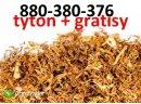 Super tytoń wszystkie rodzaje ld,marlboro, korsarz ondraszek i inne 70zł  880-380-376